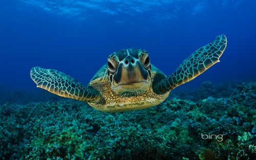 Sea Life wolpeyper with a hawksbill turtle, a green turtle, and a loggerhead called Sea Life