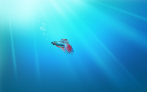 Sea Life wallpaper called Sea Life