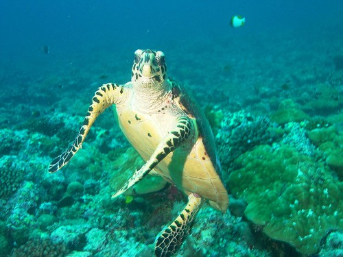 Sea Life wolpeyper containing a hawksbill pagong called Sea Life