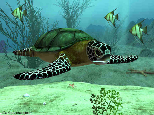 Sea Life Обои possibly containing a green turtle, a hawksbill turtle, and a sea черепаха entitled Sea Life