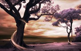 The Beauty of the Trees