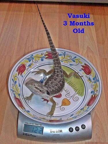 Vasuki @ 3 Months