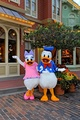 donald - donald-duck photo
