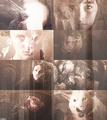 Au meme: The Starks as Werewolves