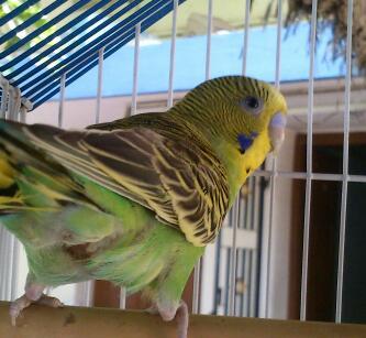 愛 bird