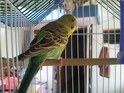 cinta bird