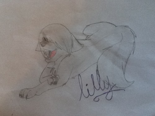 my lilly drawing