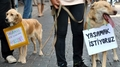 Turkish Animal Law Protest - animal-rights photo