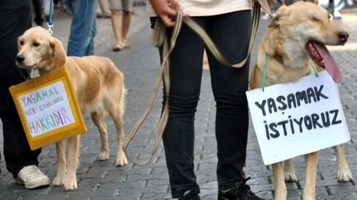 Turkish Animal Law Protest