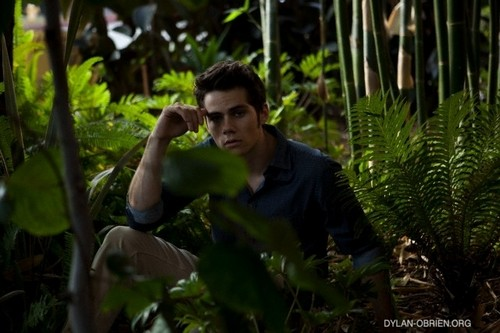Dylan O'Brien Hintergrund with a banana, common bamboo, and cultivated reis entitled Da Man Magazine