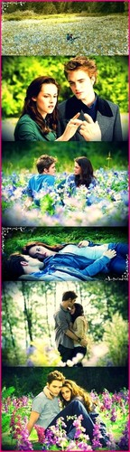 Edward and Bella scenes from their meadow