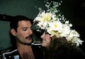 Freddie - freddie-mercury photo