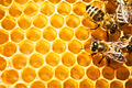 sarang lebah, pengisian