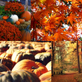 Lovely Autumn - autumn photo