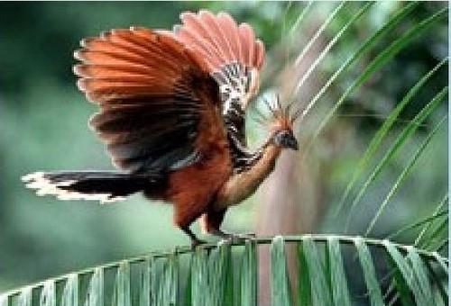 National Bird,Flower & Animal of Guyana