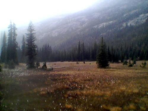 North Cascades Washington: Alpine Meadows