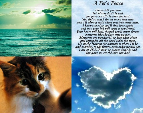 Beautiful Pictures wallpaper possibly with anime titled a pet's peace