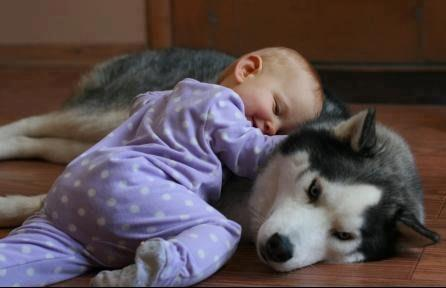 beautiful dog & baby