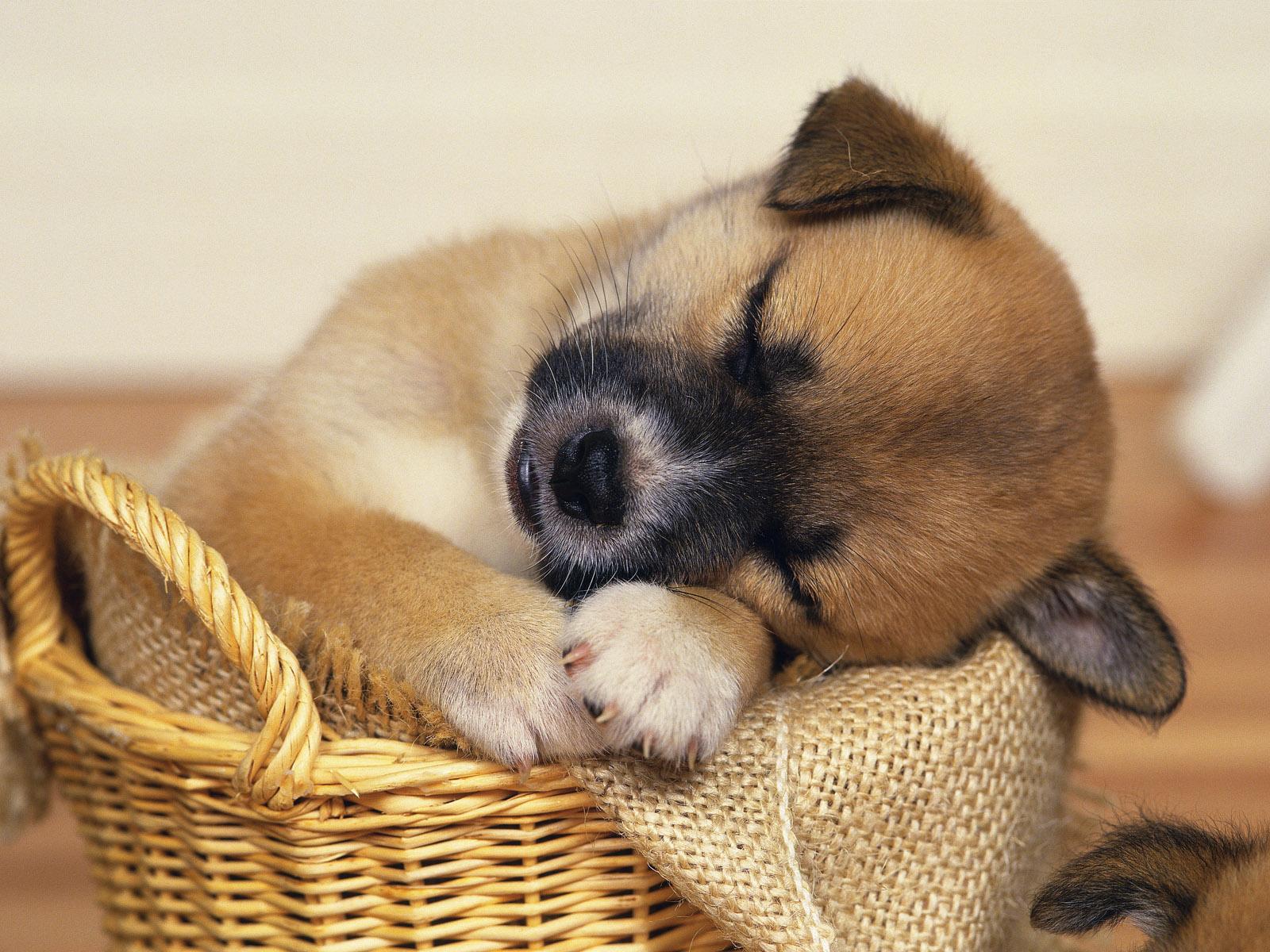 Dogs cute doggies