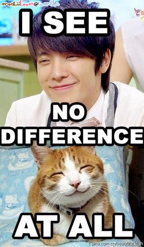 donghae _ cat