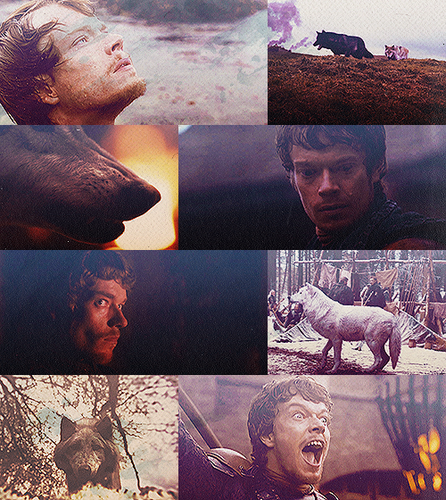 Theon Greyjoy + Direwolves