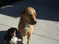 my dogs - fanpop-pets photo