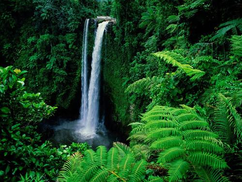 Rainforest wallpaper entitled rainforest