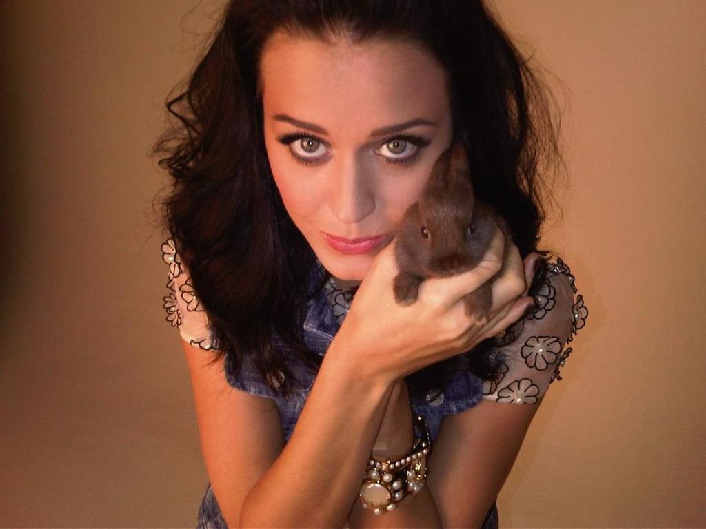 Katy Perry Katy Katy Perry