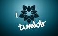 ~Tumblr~