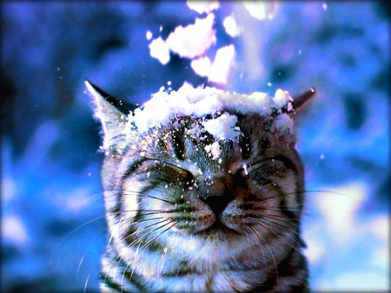 ★ Winter gatos ☆