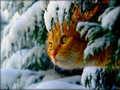  Winter cats   - winter wallpaper