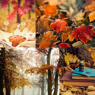 Autumn ~ ♥