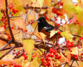 Autumn birds ~ ♥ - autumn photo