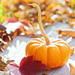 Autumn pumpkins ~ ♥ - autumn icon