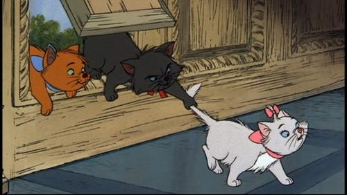 Fighting Kitten