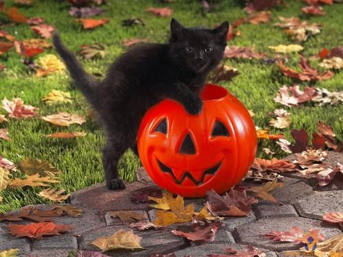 Happy! Halloween!