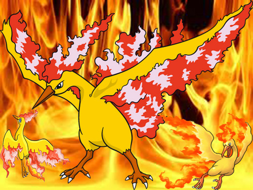 Pokémon wallpaper titled Moltres Wallpaper