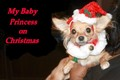 Ms Princess on Christmas - chihuahuas photo