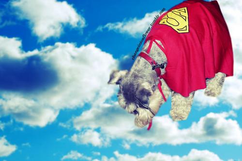 My dog flies!