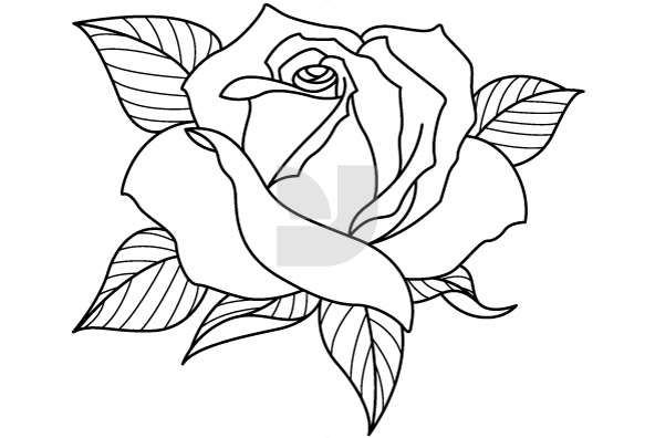 Line Drawing Of Rose Flower : Over different types of flowers images rose wallpaper