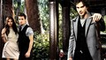 TVD - damon-salvatore wallpaper