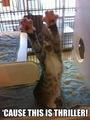 Thriller Kitten - michael-jackson photo