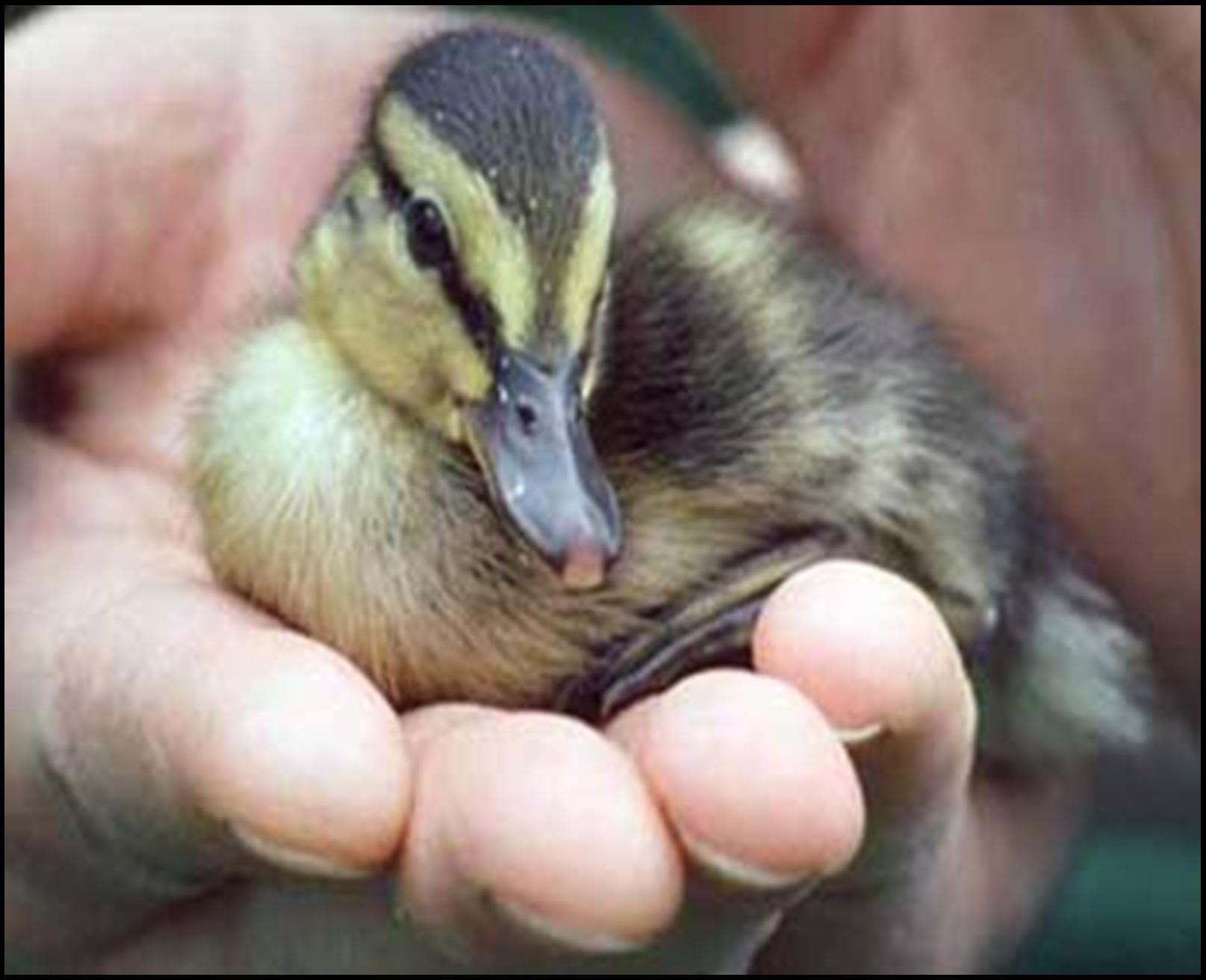 Animal Rights - Animal Rights Photo  32573282