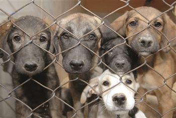 hak azasi hewan