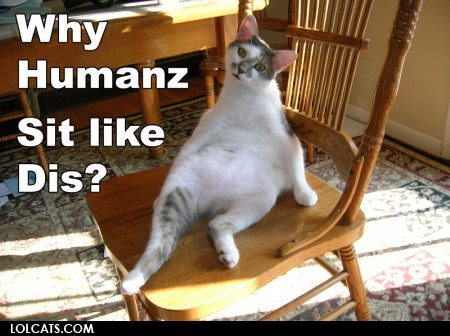 lol cats images lolcats wallpaper photos 32524590