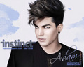 Adam♥Lambert - adam-lambert wallpaper