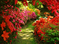 garden fleurs
