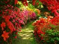 garden 꽃