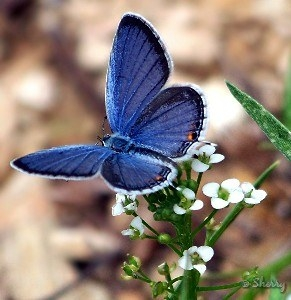 Beautiful Blue Schmetterlinge