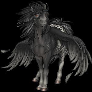 Black Pegasus Coats